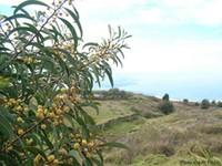CREP Tree image_mini