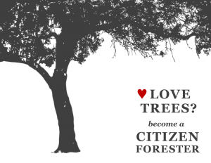 Citizen Forester - Love Trees
