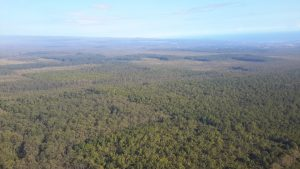 Waiākea Timber Management Area