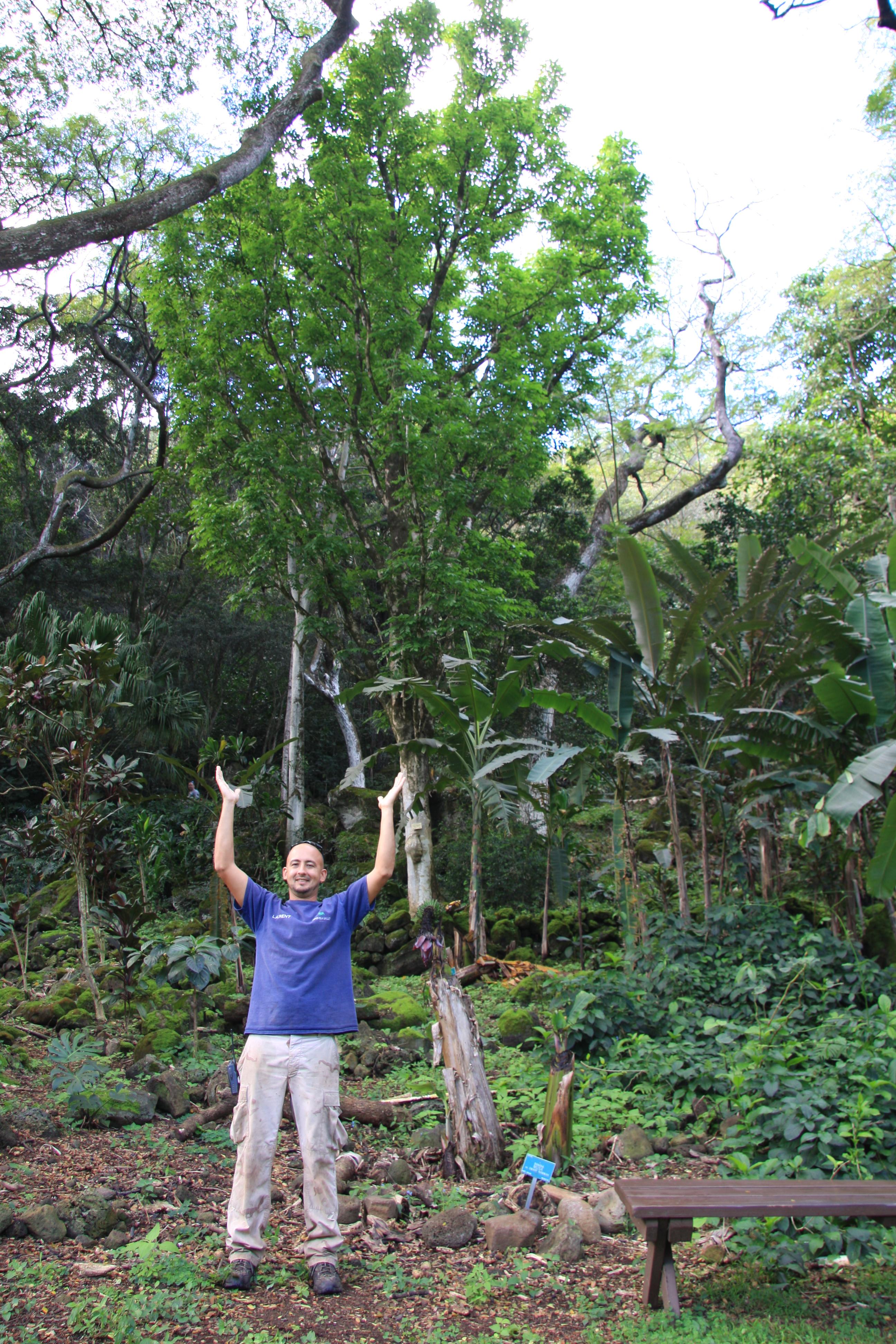 Forestry Programs Ohe Makai