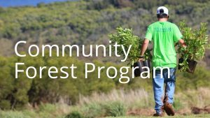 An image of a person planting tree linking to info on the Community Forest Program