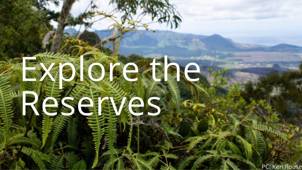 An image of a forest reserve linking to a page to explore the reserves