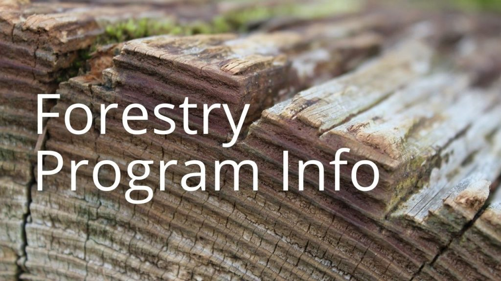 An image of cut wood linking to a page on forestry program information