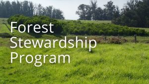 An image of trees and button related to the Forest Stewardship Program