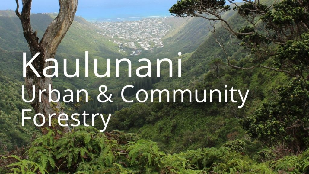 An image of a community beyond a forest linking to Kaulunani Urban and community forestry pages