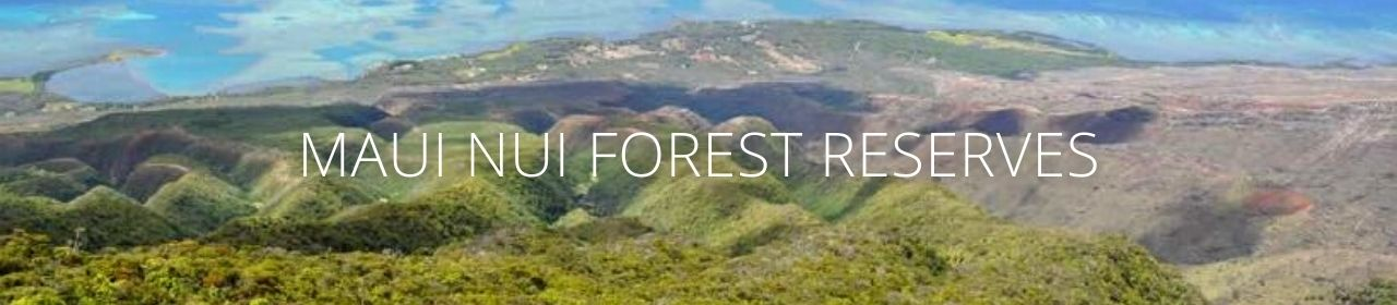 An image of a forest with the words Maui Nui Forest Reserves