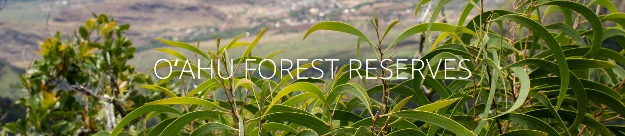 An image of koa with the words Oahu Forest Reserves