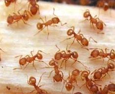 Hawaii Invasive Species Council | Invasive Species