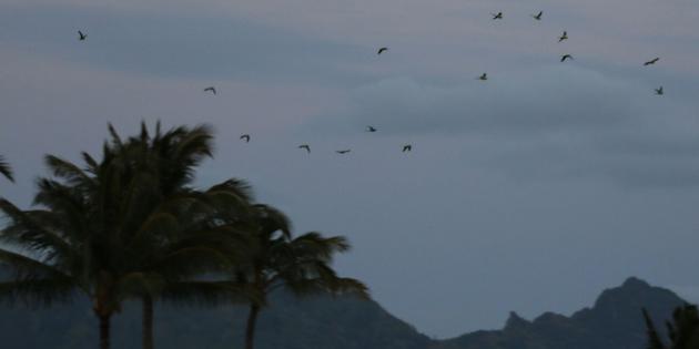 Hawaii Invasive Species Council | News Release: Invasive