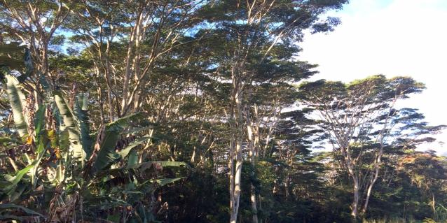 Hawaii Invasive Species Council