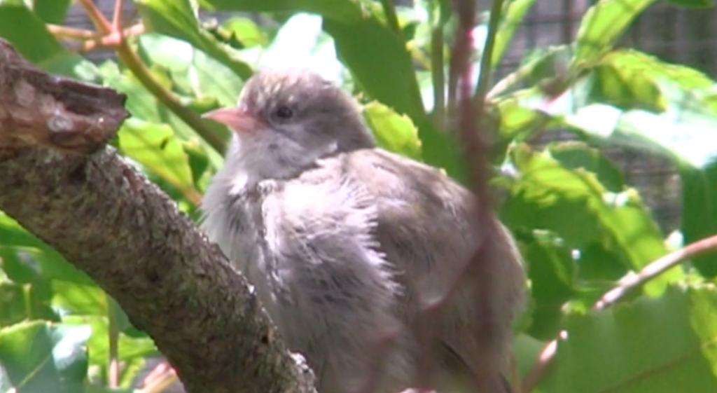DLNR & YOU - Endangered Forest Birds