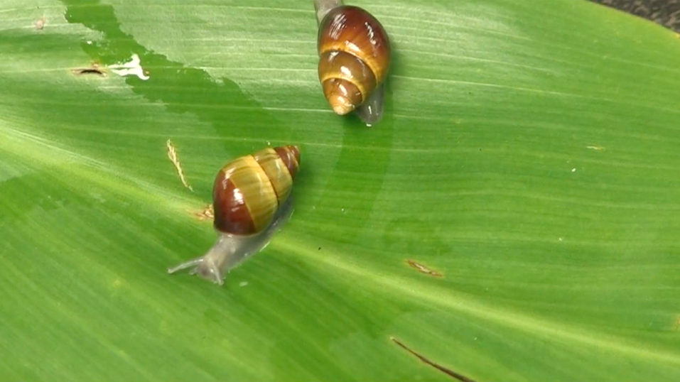 DLNR & YOU - Endangered Tree Snails