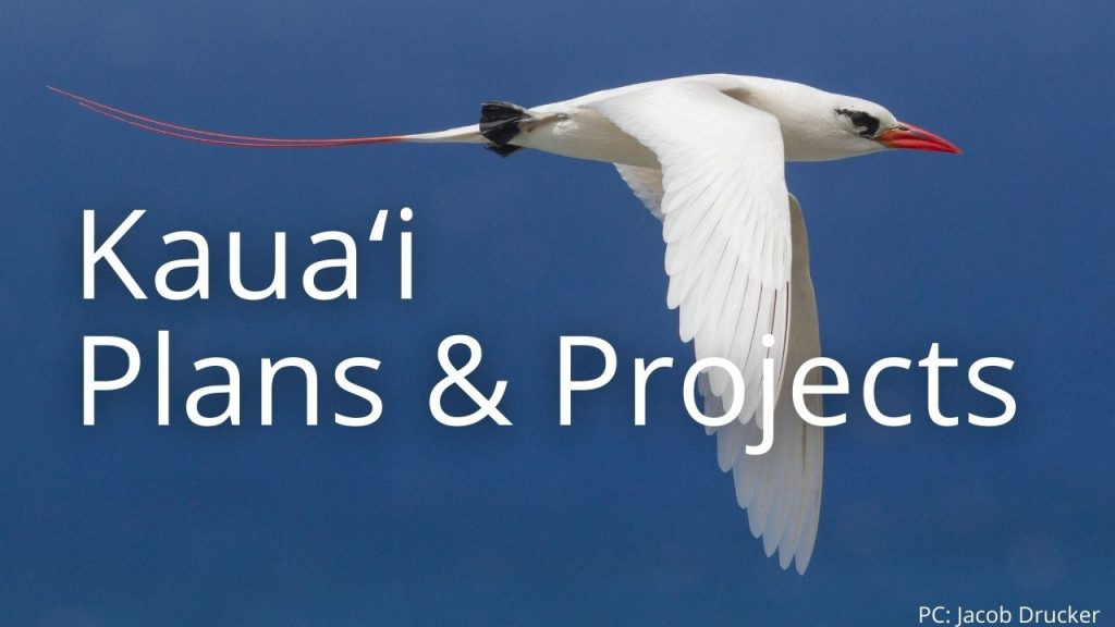 An image of a red-tailed tropic bird linking to Kauaʻi Plans & Projects