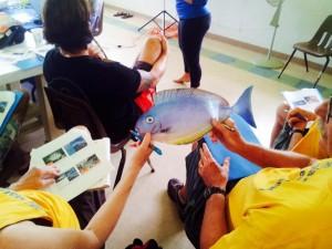 Minimum Size fish cut outs - Pupukea