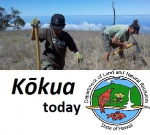 kokua today
