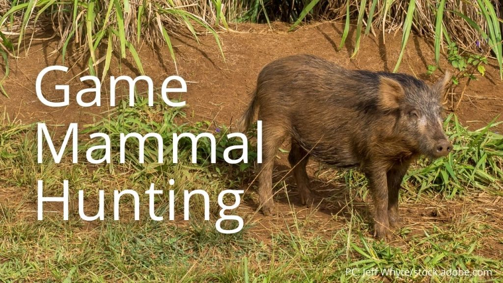 An image of a pig linking to Game Mammal Hunting