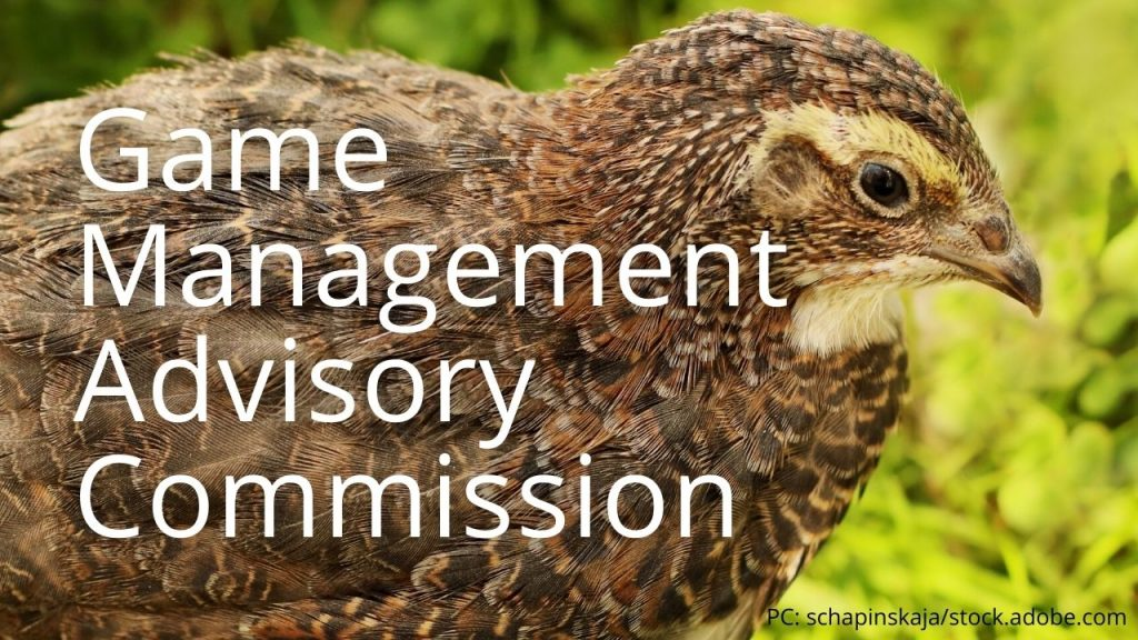 An image of a Japanese quail linking to Game Management Advisory Committee
