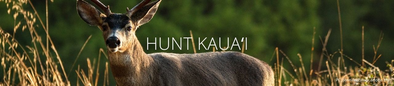 An image of a black-tailed deer with the words Hunt Kauaʻi