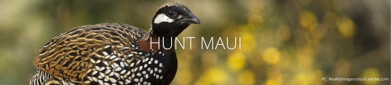 An image of a black francolin with the words Hunt Maui
