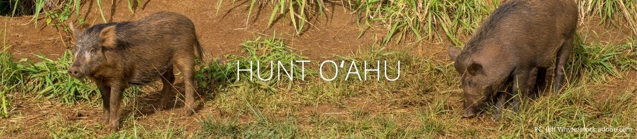 An image of two pigs with the words Hunt Oʻahu
