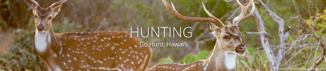 An image of axis deer with the words Hunting and Go Hunt, Hawaiʻi