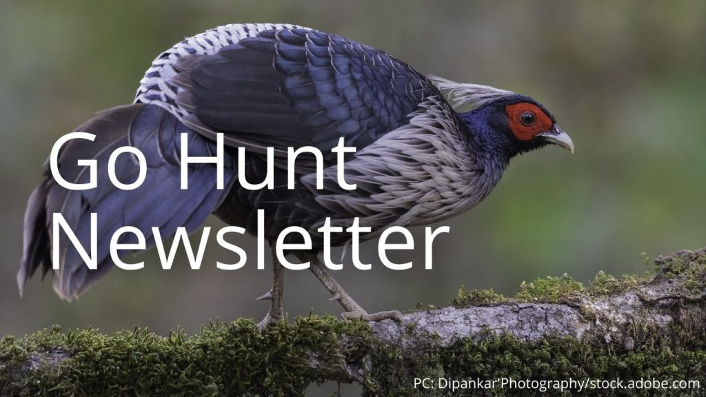 An image of a kalij pheasant linking to Go Hunt Newsletter