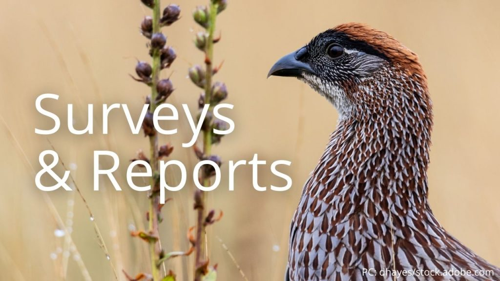 An image of an Erckel's Francolin linking to Surveys & Reports