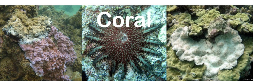 coral with disease, large starfish, and bleached coral on a reef