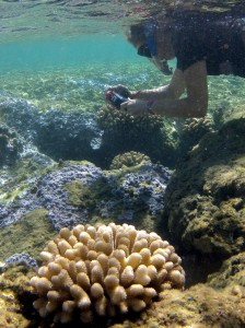 DAR staff inspecting coral disease sites, photo credit: DAR