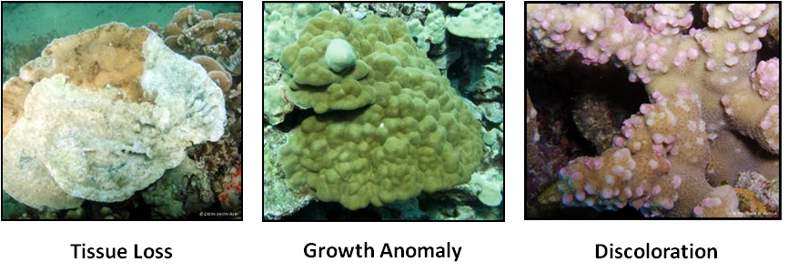 coral disease types, tissue loss, growth anomaly, and discoloration