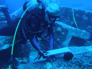 scuba diver inspected a collector sea urchin
