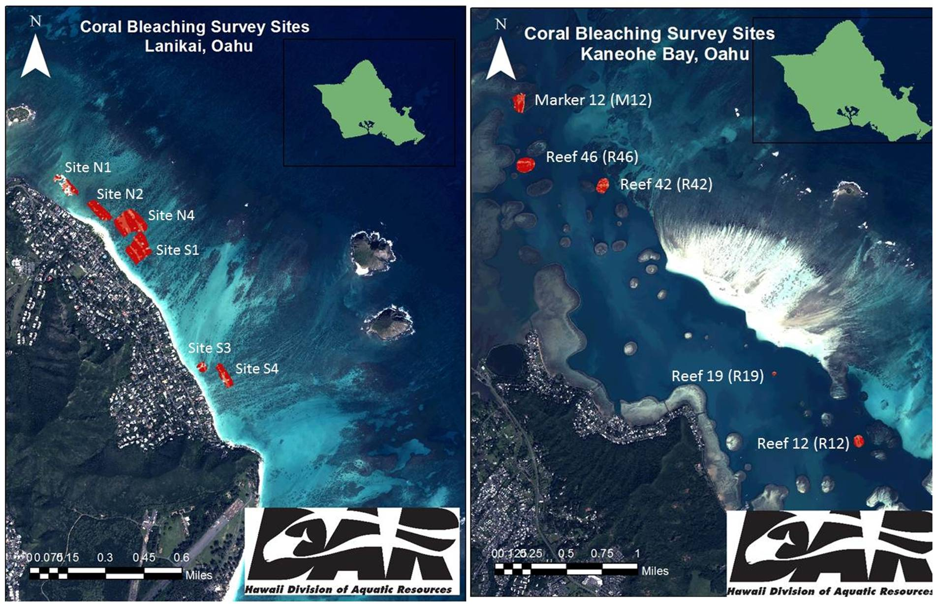 Reef Response Latest Info Coral Bleaching