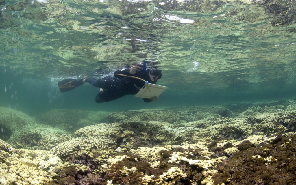 DAR diver conducting coral bleaching surveys