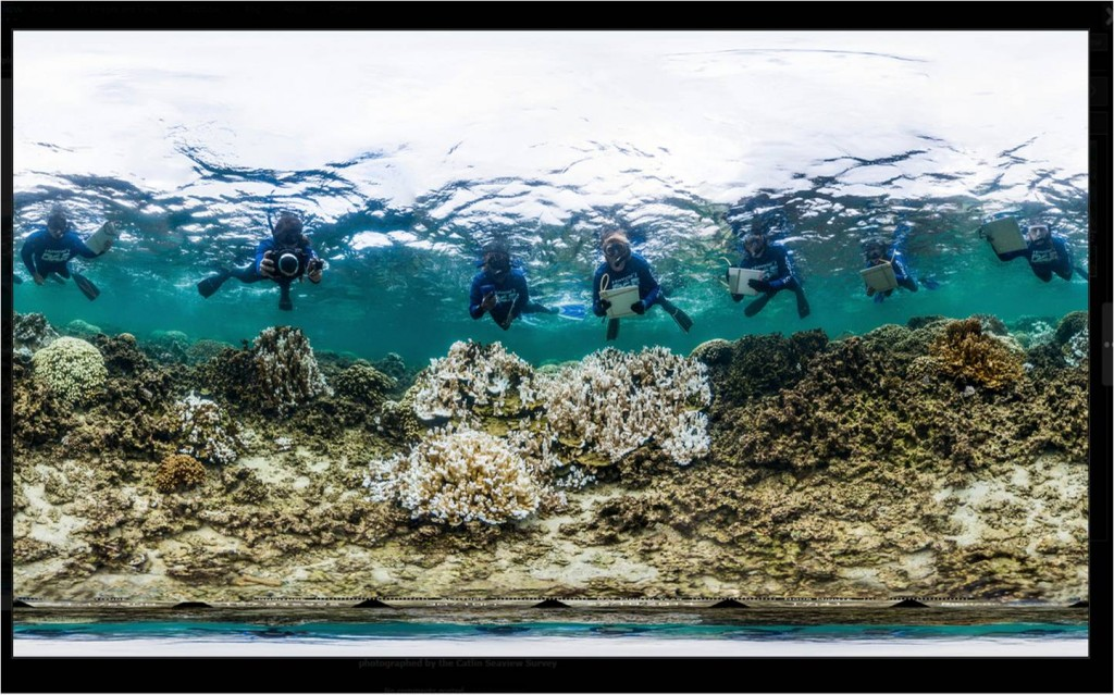 DAR Rapid Response Team surveying bleached corals