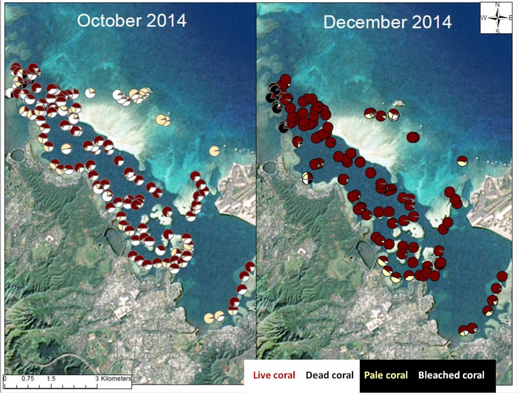 map showing coral recovery from bleaching in Kaneohe bay