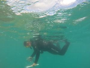 HIMB researcher conducting disease surveys in Kaneohe bay, photo credit: DLNR-DAR