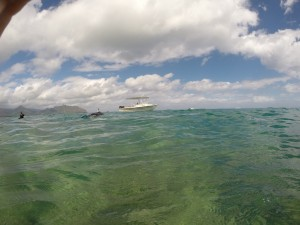 The Rapid Response Team surveying in Kaneohe Bay, photo credit: DLNR-DAR
