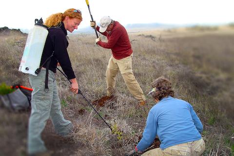 image of people tending to Mauna Kea lands