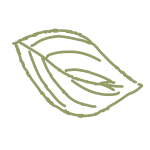 Pilo leaf
