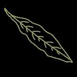 aalii leaf