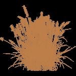 fountian grass