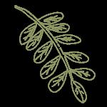 mamane leaf