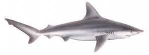image of Sandbar shark