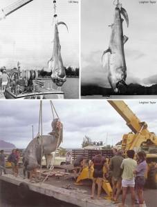 Megamouth composite photos