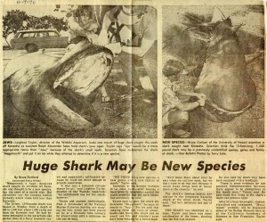 Megamouth shark article
