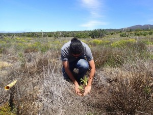 Volunteers worked to plant 1,300 seedlings of māmane and 'a'ali'i in the Ka'ohe Restoration Area.