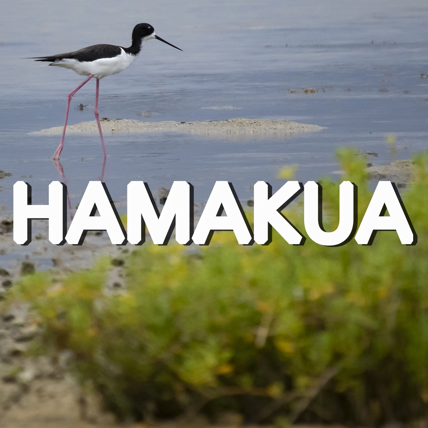 Button to learn more about Hamakua