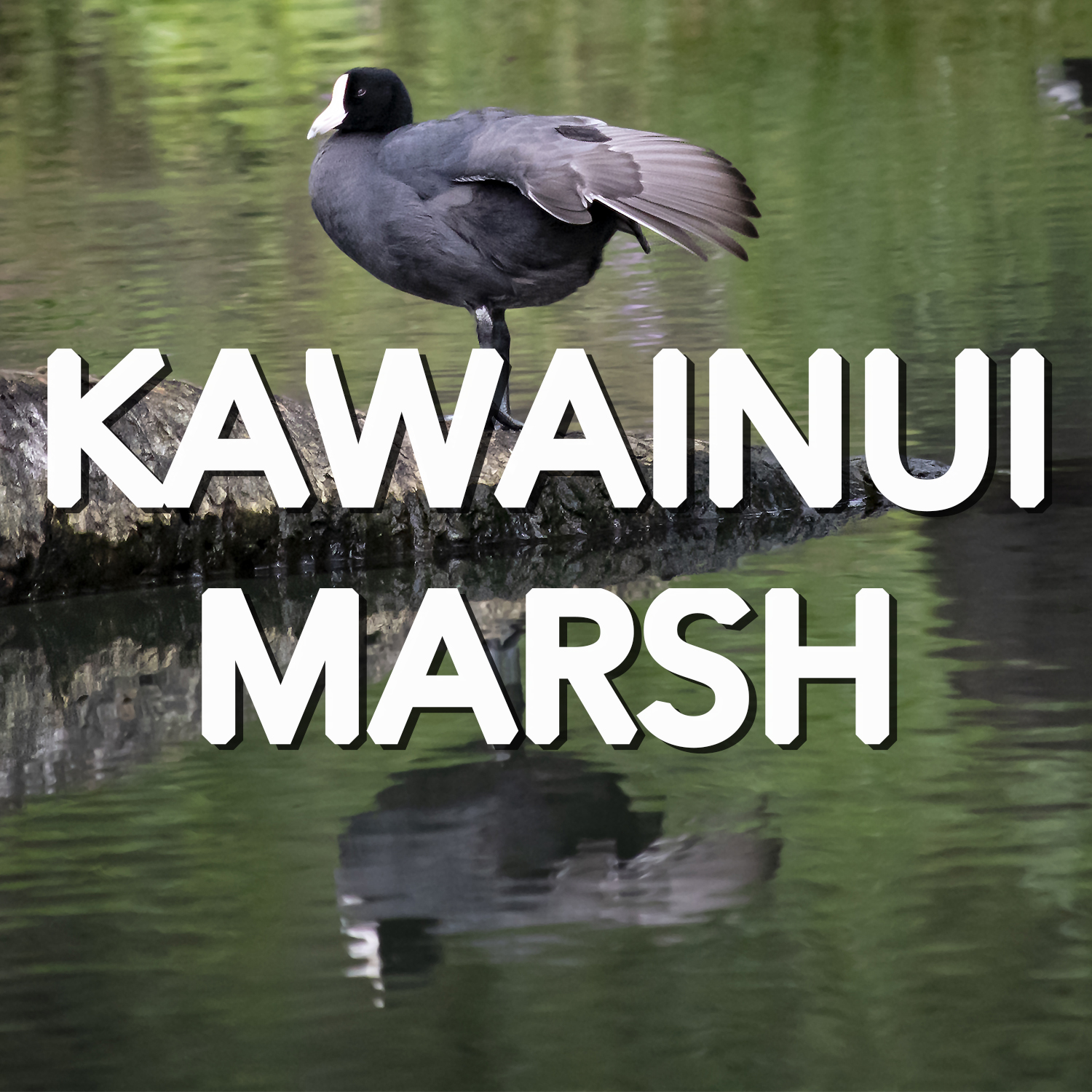 Button to learn more about Kawainui Marsh