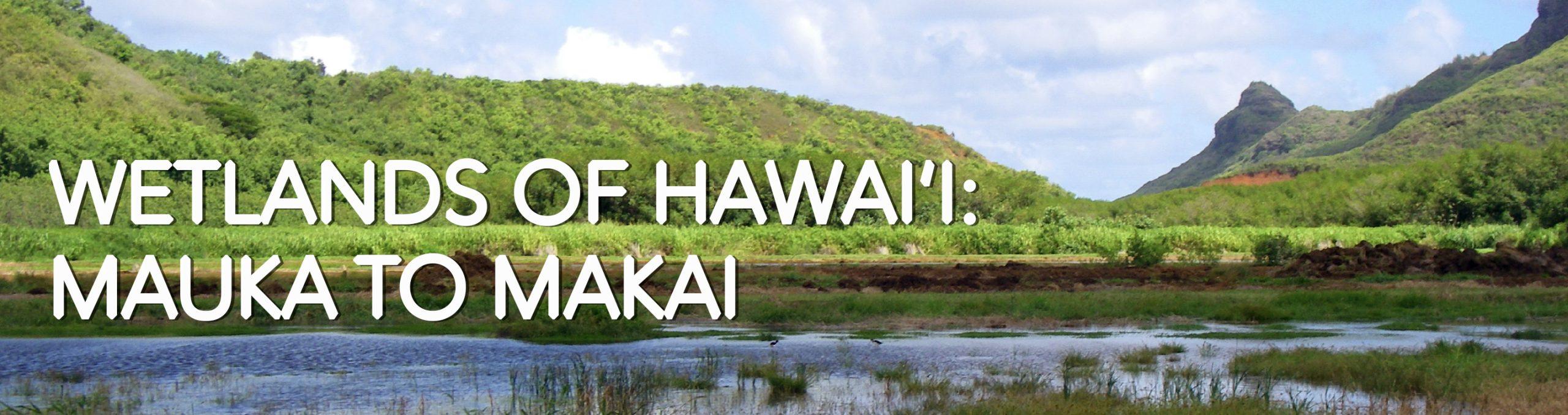 Banner image for wetlands