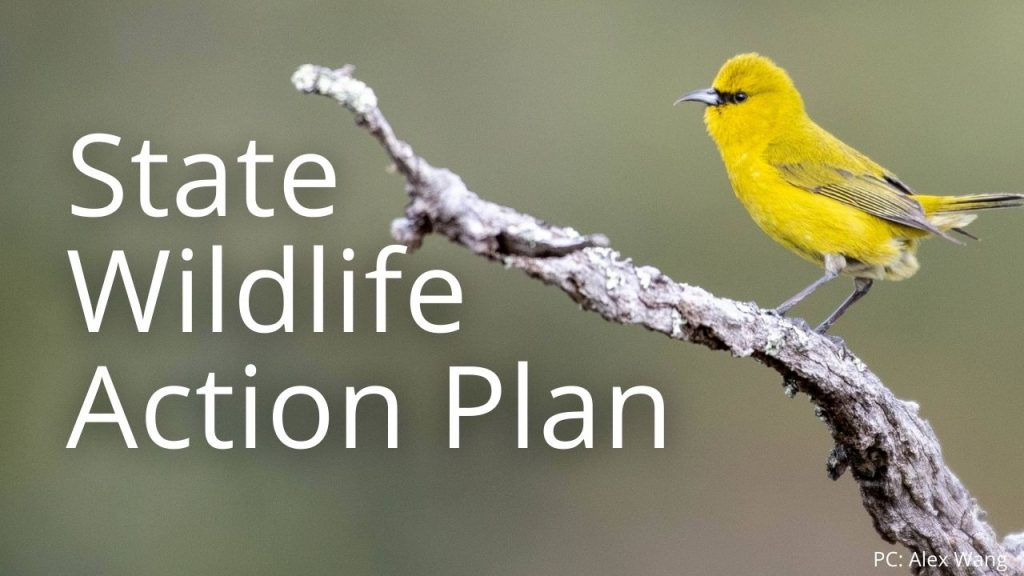 An image of an 'Akiapola'au linking to a page on the State Wildlife Action Plan